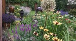 juillet-top-floraison