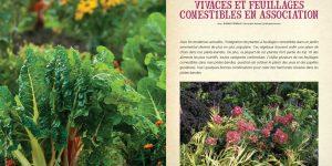 Vivaces et feuillages comestibles en association